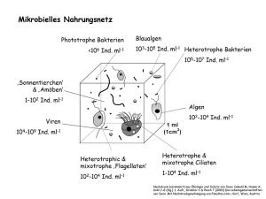 Mikrobielles Nahrungsnetz