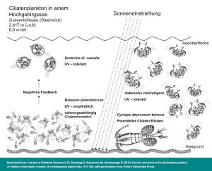 Ciliatenplankton im Hochgebirgsee