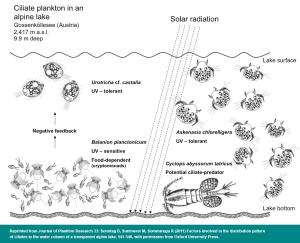 Ciliate plankton in an alpine lake